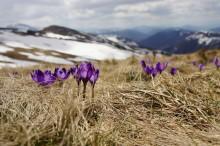 Prisnedgången pausas av vårvädret