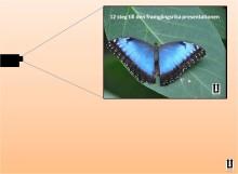 12 steg till den framgångsrika PowerPoint-presentationen