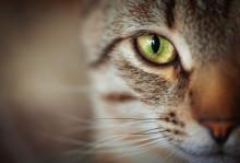 Återkallelse: Bozita Feline kattmat återkallar torrfoder