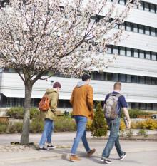 Högt söktryck till Högskolan i Halmstads utbildningar