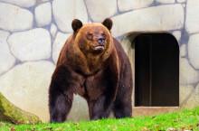 Björnarna är vakna - våren är kommen till Skånes Djurpark!