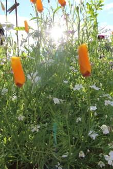 Premiär för ny trädgårdsmässa i Sigtuna