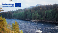 Projektet Två länder – én elv ska skapa förutsättningar för en hållbar förvaltning  av laxbeståndet och den biologiska mångfalden