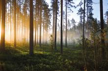 Ny rapport: Så stor skillnad gör Växjö Energi och Växjöborna för klimatet