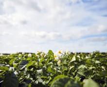 FødevareBanken og Fødevarevirksomheden Flensted indgår strategisk samarbejde
