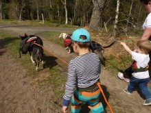 Huskyhunde guider danskere gennem den svenske natur