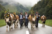 Lebendige Tradition hautnah erleben: Alpabzüge begeistern zum Ende des Bergsommers