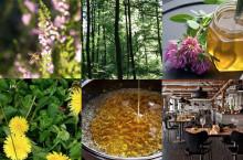 Sista chansen Honungsprovning 8 oktober