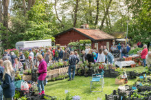 Trädgårdslust våren 2018