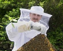 Vad händer hos bina i sommar?