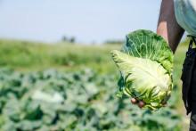 I höst ska fler kunna välja svenska grönsaker