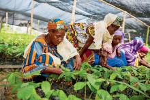 Nestlén vastuullisuusfoorumissa käsitellään kestävää kehitystä Afrikassa