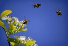 Beredskapen måste höjas för hot mot honungsbin