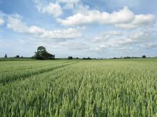 Kommuninvests gröna obligationer bidrar till 611 000 ton i minskade CO2-utsläpp