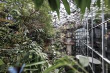 Premiär för nya Regnskogen – nu börjar äventyret!
