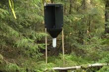 Doftämnen ska skydda skog mot nya skadeinsekter