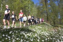 Stort internationellt intresse för Linnémarschen 2017