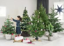Pynta med växter till julen. Som du vill.