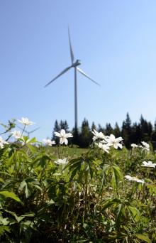 Kraftiga vårvindar ger mycket vindkraft – gårdagens vindkraft stod för närmare 30 procent av Sveriges elförbrukning