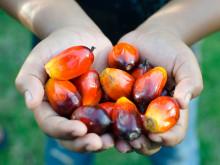 Orkla Foods Sverige tar ytterligare krafttag mot palmoljan
