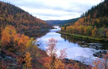Autumn Leaf Colour and Adrenaline Rushes in Finnish Lapland