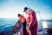 """HaV föreslår nya regler för hummerfiske: """"Viktigt för att stärka beståndet i svenska vatten"""""""