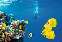 Nyt projekt inddrager lokale i beskyttelse af koralrev