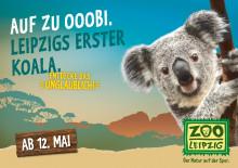 Neues Koala-Haus öffnet am 12. Mai 2016 im Zoo Leipzig