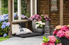 Trädgårdsprofilen Annika Christensen recenserar prisbelönta trädgårdshortensian Forever&Ever i nytt filmklipp