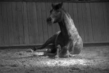 Stoppa spridningen av EHV-1, även kallat abortviruset, inom hästbranschen