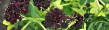 Tusen Trädgårdar (minst!) öppnas 12 augusti 2012