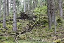 Nu blir Stora Höghult ett naturreservat