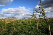 Center Parcs supports Forest of Marston Vale planting project
