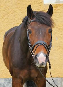 Speakers Corner lyfter hästnäringens mest aktuella frågor under Eurohorse