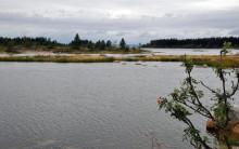 Mindre fisk i framtidens Östersjö