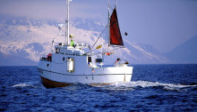 Norwegian codfish exports at record levels in January