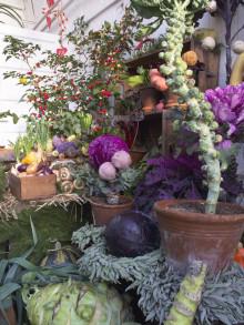 Inspiration och tradition på Bergianska trädgårdens julutställning
