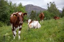 Seks grunner til å spise norsk mat