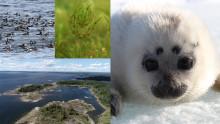 FN-konvention slår fast att nio områden i Östersjön har särskilda naturvärden