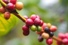 Kaffekonferansen 2017