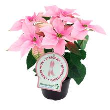Dagens Rosa Produkt 11 oktober - en Höststjärna från Mäster Grön