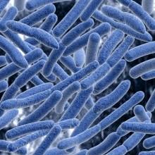 Finns ESBL-bildande E. coli i livsmedel?