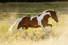 Sveriges hästnäring omsätter mer än 72 miljarder