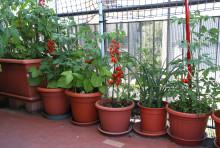Tipsen för att odla grönt i stadsmiljö