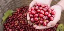 Vad innebär KRAV-märkt kaffe?
