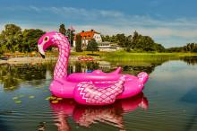 Världens största flamingo har landat