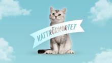 Nu ska kattägandet bli mer ansvarsfullt – Mjau lanserar kattkörkortet i samarbete med Djurskyddet Sverige