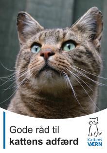 Gode råd til kattens adfærd