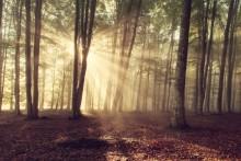 Solhungriga svenskar satser på solenergi - Kraftkommentar fra LOS Energy