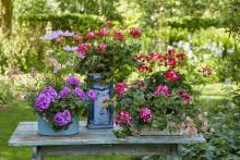 Skapa din egen oas med hjälp av blommor